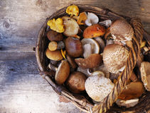 Variety of uncooked wild forest mushrooms in a basket Stock Photography