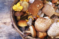 Variety of uncooked wild forest mushrooms in a basket Royalty Free Stock Images