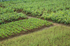 Variety vegetable plants in growth Stock Photo