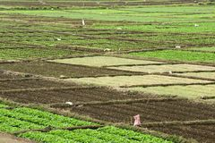Variety vegetable plot. For backgrounds Royalty Free Stock Photo