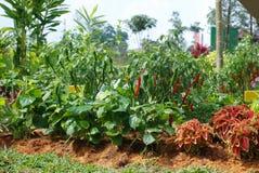 Variety of vegetables in home garden Stock Photos