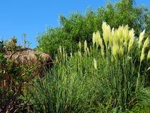 Wild vegetation in the Turkish resort. Variety of vegetation in the Kemer region. Beautiful juicy greens Royalty Free Stock Photo
