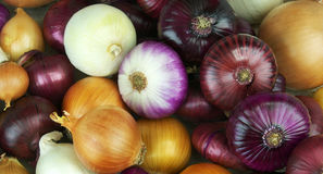 Variety of whole and sliced onion Royalty Free Stock Photography