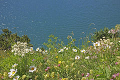 Variety of wildflowers at alpine lake shore lunersee. Austria Royalty Free Stock Photos