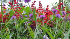 A Variety of Wildflowers. Red and Purple Wildflowers. Camera Movement Along the Beds of Flowers Gives the Opportunity to stock video