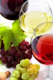 Variety of wine Stock Photography