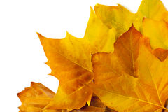 Vario Autumn Leafs Fotos de archivo