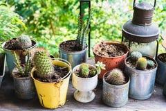 Vario cactus in un vaso Immagine Stock Libera da Diritti