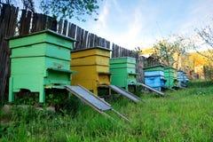 Casas de abeja Imagen de archivo