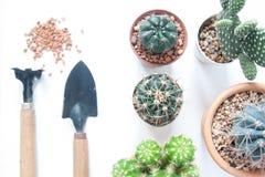 Vario del cactus con gli strumenti di giardino su fondo bianco Immagine Stock