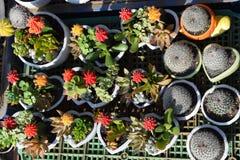 Vario del cactus variopinto e dei succulenti Immagine Stock Libera da Diritti