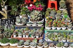 Vario del cactus variopinto e dei succulenti Immagine Stock