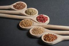 Vario delle spezie in cucchiai di legno Fotografie Stock Libere da Diritti
