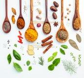 Vario delle spezie e delle erbe indiane in cucchiai di legno Disposizione piana di Fotografia Stock Libera da Diritti