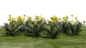 Vario diversa planta de Frailejon en el fondo blanco stock de ilustración