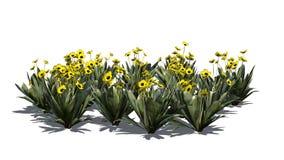 Vario diversa planta de Frailejon en el fondo blanco ilustración del vector
