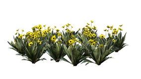 Vario diversa planta de Frailejon en el fondo blanco libre illustration