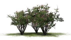 Vario diverso arbol de Jupiter con los flores ilustración del vector