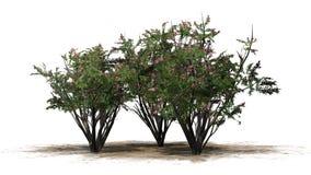 Vario diverso arbol de Jupiter con los flores libre illustration