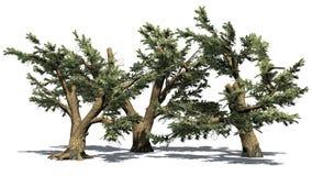 Vario diverso cedro de los árboles de Líbano ilustración del vector