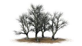 Vario diverso Katsura Trees en el invierno en un área de la arena stock de ilustración
