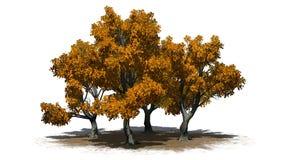 Vario diverso Katsura Trees en el otoño en un área de la arena libre illustration