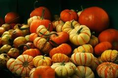 Vario fondo di autunno delle zucche Immagini Stock