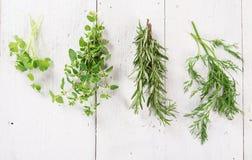 Vario genere di erbe fresche fotografie stock
