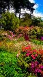 Vario genere di flora in un parco in primavera fotografia stock