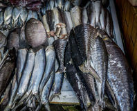 Vario genere di pesce sul mercato tradizionale di bogor Indonesia fotografia stock libera da diritti