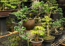 Vario genere di vendita dell'albero dei bonsai nel deposito della pianta per le piante decorative Jakarta contenuta foto Indonesi fotografia stock