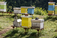 Vario la abeja de madera pintada encorcha en una huerta Imagen de archivo libre de regalías