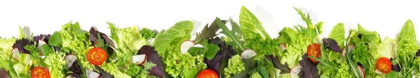Vario panorama dell'insalata fotografie stock