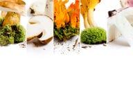 Vario preparato del fungo Immagini Stock Libere da Diritti