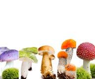 Vario preparato del fungo Fotografia Stock