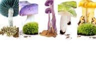 Vario preparato del fungo Fotografie Stock Libere da Diritti