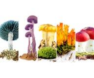 Vario preparato del fungo Fotografia Stock Libera da Diritti