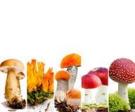 Vario preparato del fungo Immagine Stock Libera da Diritti