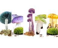 Vario preparato del fungo Immagini Stock