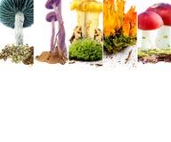 Vario preparato del fungo Fotografie Stock