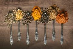 Vario tipo spezie sui cucchiai Fotografie Stock