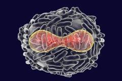 Variola virus illustration Stock Photo
