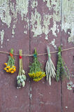 Varions plants and medical herb bunch on old wall Royalty Free Stock Photography