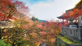 Variopinto dalla foglia dell'albero con sole e cielo blu a kiyomiz fotografia stock
