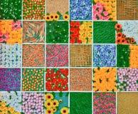 Variopinto dei fiori nel fondo della struttura Immagini Stock
