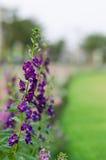 Variopinto del fiore Immagine Stock Libera da Diritti