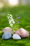 Variopinto di Flower-02 Fotografia Stock Libera da Diritti
