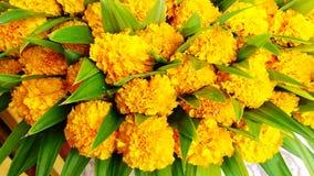 Variopinto di molti fiori del tagete Fotografia Stock Libera da Diritti