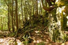 Varios árboles que crecen fuera de una pared de la roca en el condado de Door, WI imágenes de archivo libres de regalías