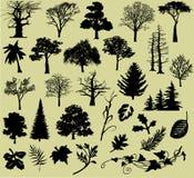 Varios árboles y hojas Fotos de archivo